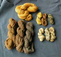 Skeins dyed with Dyer's Polypore