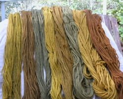 From the Phaeolus dyepot